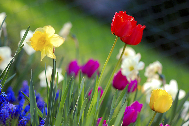 Spring+Break