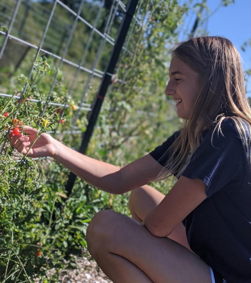 Girl Scout Gives Back by Growing Greens